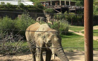 Kamel, Elefant & Co
